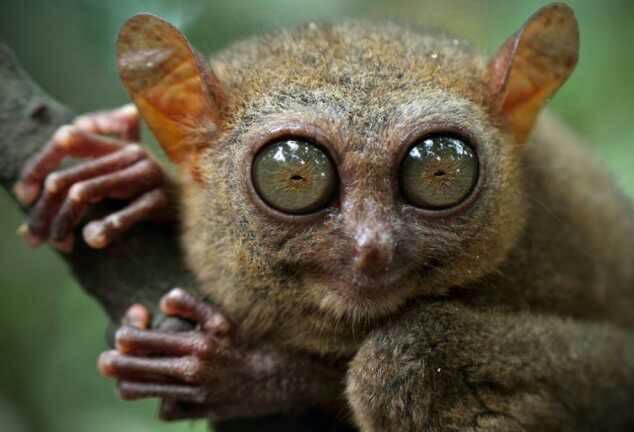 A legfurcsább állatok - Hihetetlen, de tényleg léteznek