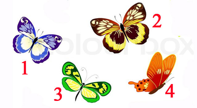 A kiválasztott pillangó fontos dolgot üzen