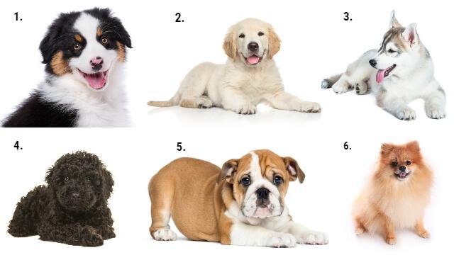 Melyik kutyád választanád? a személyiségedről ezt árulja el a döntésed
