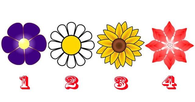 Angyali üzenet - Válassz egy virágot